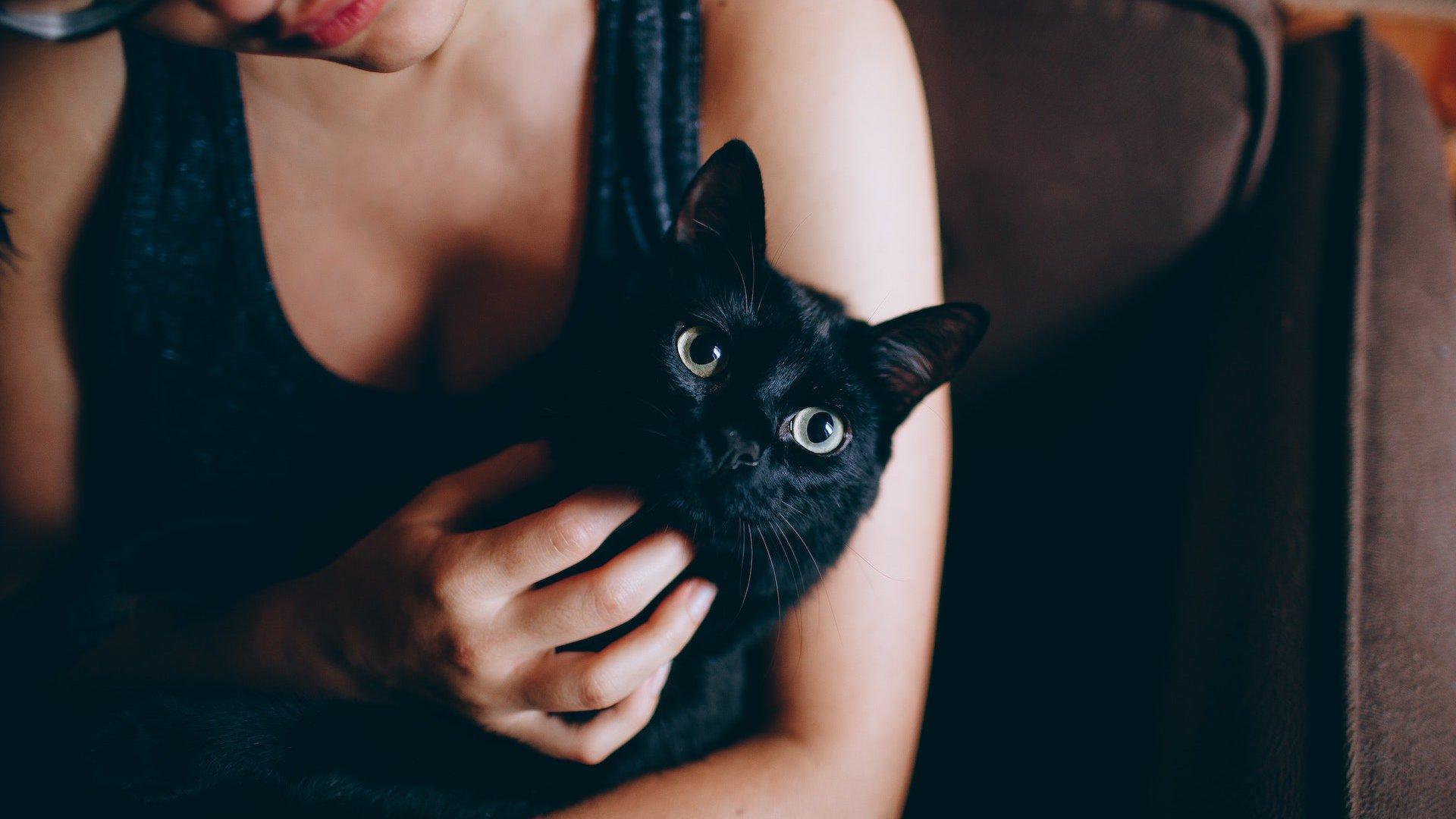 La leyenda de los gatos negros