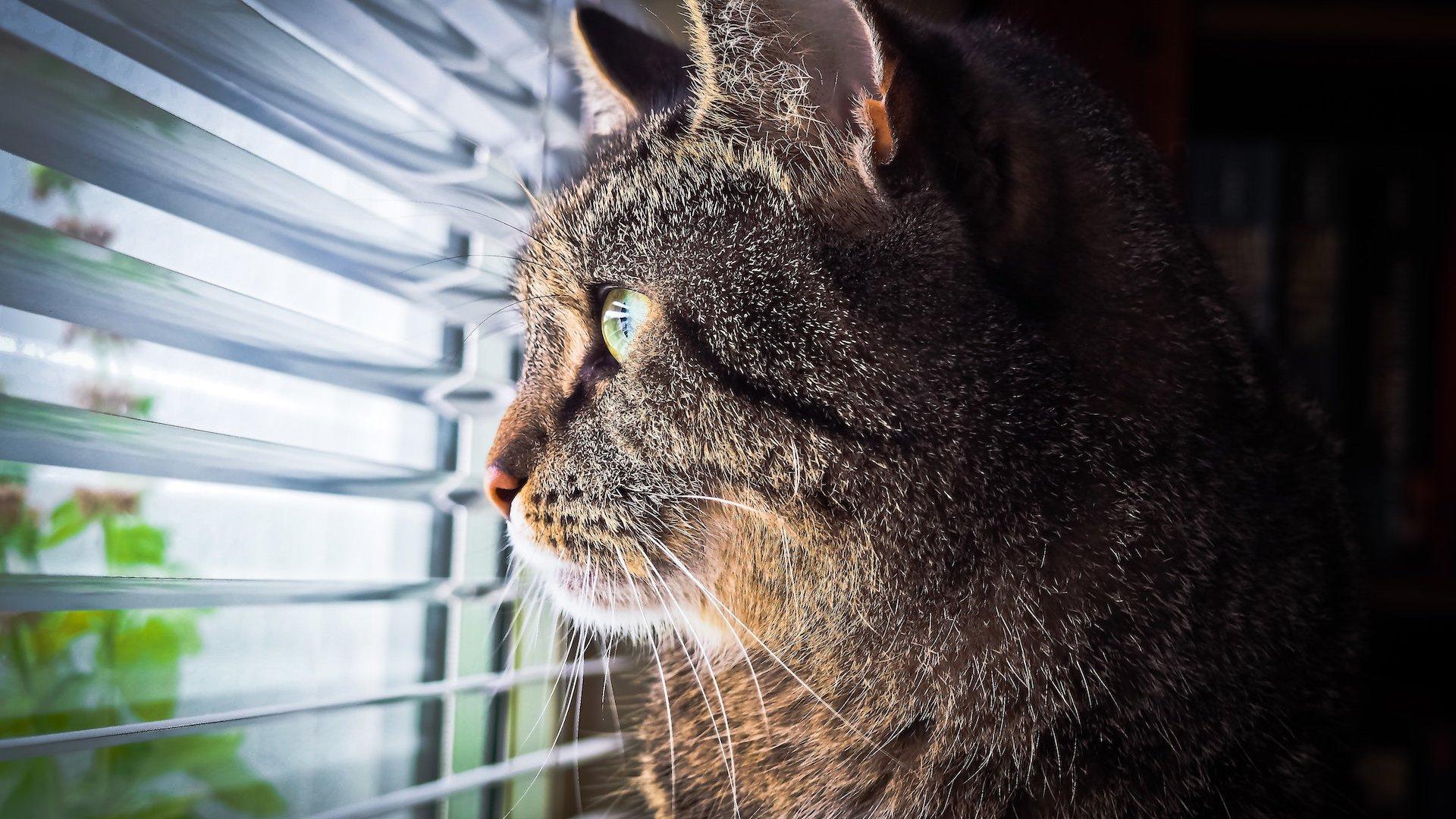 ¿Ventana abierta y gato curioso? ¡¡¡¡¡¡¡CUIDADO!!!!!!!