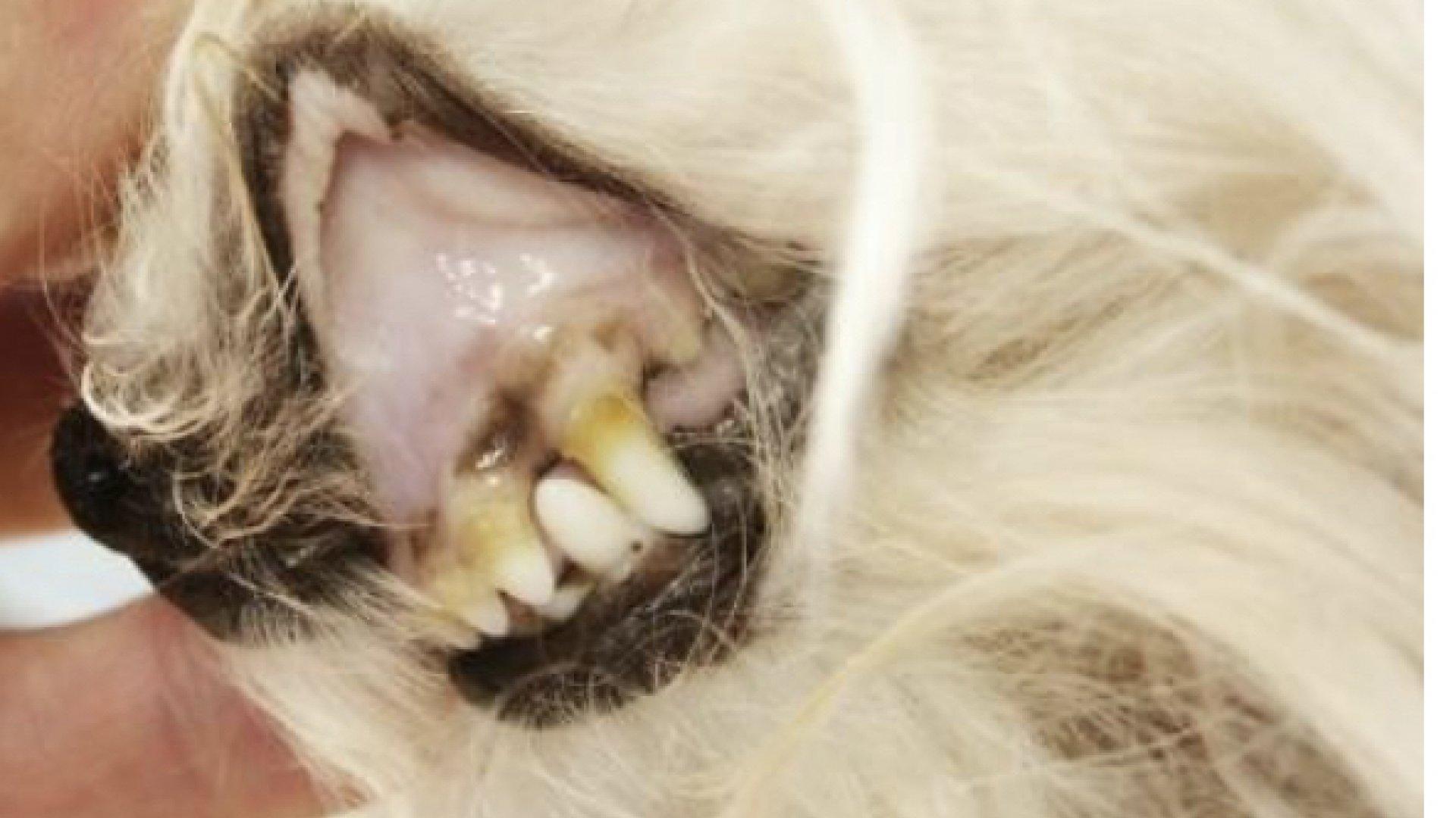 mucosas pálidas